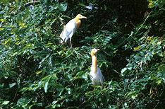 Bird Sanctuary Kumarakom Wildlife Tours Kerala