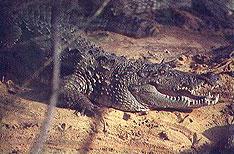 Crocodile Bank Chennai Tours