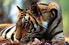 Dudhwa National Park Uttar Pradesh Wildlife Travels