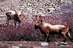 Kalatop wildlife sanctuary Travel Himachal Pradesh India