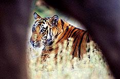 Manas National Park Travel Assam