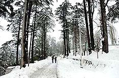 Honeymoon Tours Patnitop Jammu and Kashmir