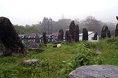 Sacred Forest Shillong Travels Tours Meghalaya