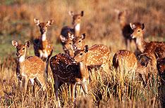 Mudumalai Wildlife Sanctuary Ooty Vacations Tamil Nadu